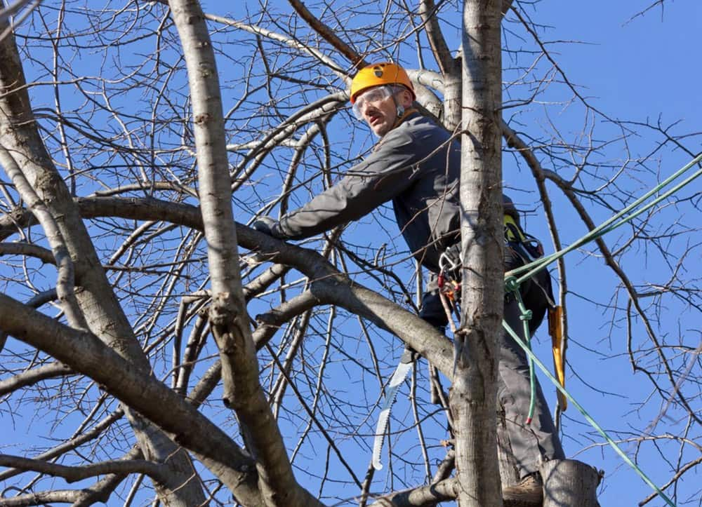 tree removal flower mound